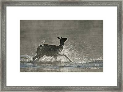 Morning Bath Framed Print by Bob Dowling