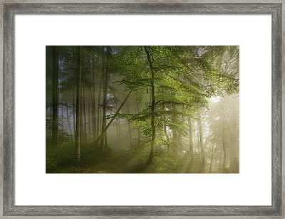 Morning Beauty Framed Print