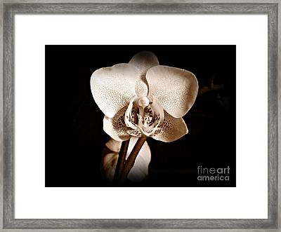 Morning Beauty Sepia Framed Print