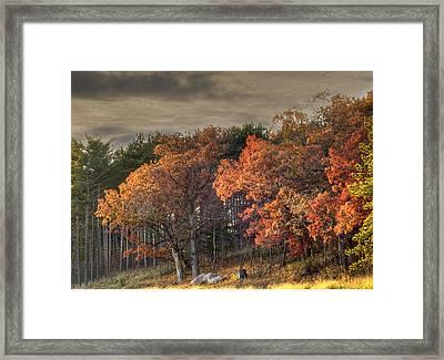 Morning Beauty Framed Print