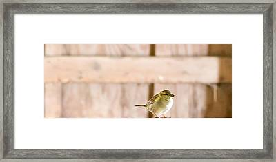 Framed Print featuring the photograph Morning Bird by Courtney Webster