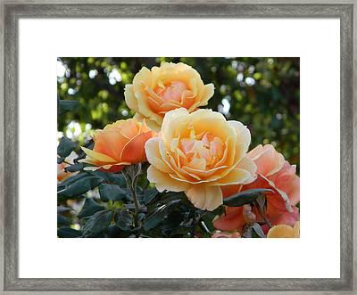 Morning Blooms Framed Print