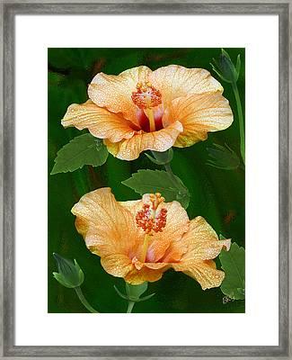 Morning Blooms - Hibiscus Framed Print by Ben and Raisa Gertsberg