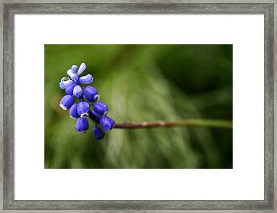 Morning Blue Framed Print by Kim Lagerhem