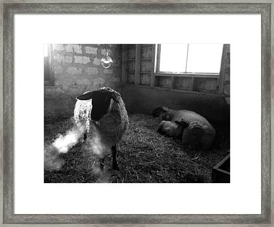 Morning Breath 1 Framed Print