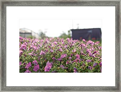 Morning Bugles Framed Print