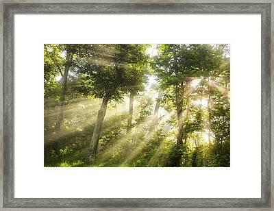Morning Bursting Forth Framed Print by Andrew Soundarajan
