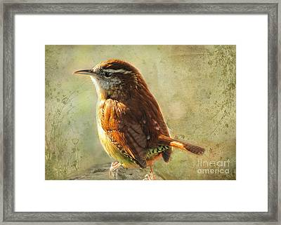 Morning Carolina Wren Framed Print