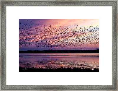 Morning Commute Framed Print by Joan Davis