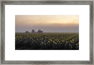 Morning Daffodil Fog Framed Print