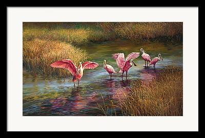 Spoonbill Paintings Framed Prints