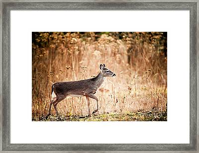Morning Deer Framed Print