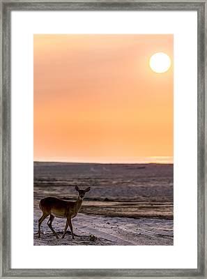 Morning Deer Framed Print