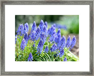Framed Print featuring the photograph Morning Delight by Linda Mishler