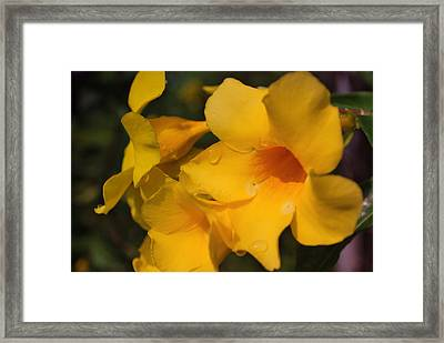 Framed Print featuring the photograph Morning  Delight by Miguel Winterpacht