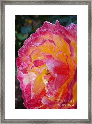 Morning Dew #7 Framed Print