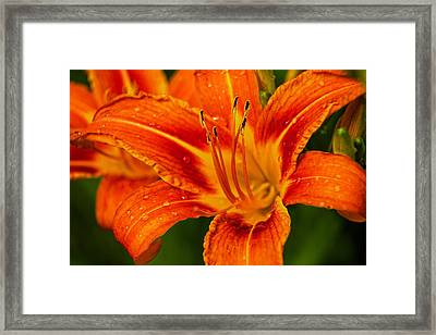 Framed Print featuring the photograph Morning Dew by Dave Files