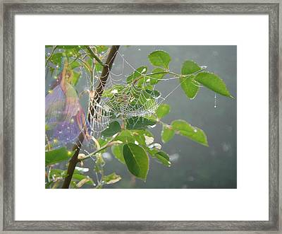 Morning Dew Flower Fairy Framed Print