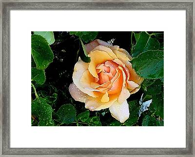 Framed Print featuring the photograph Morning Dew by Fred Wilson