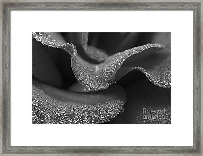 Framed Print featuring the photograph Morning Dew by Inge Riis McDonald