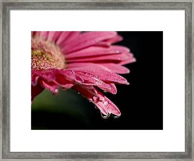 Framed Print featuring the photograph Morning Dew by Joe Schofield