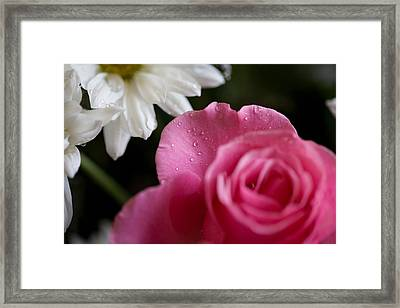 Morning Dew Framed Print by John Holloway