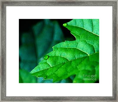 Framed Print featuring the photograph Morning Dew by JRP Photography