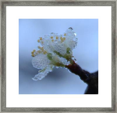 Morning Dew Framed Print by Julie Cameron