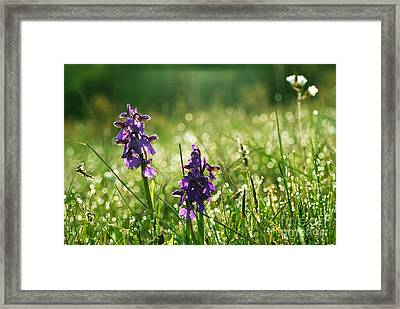 Framed Print featuring the photograph Morning Dew by Kennerth and Birgitta Kullman