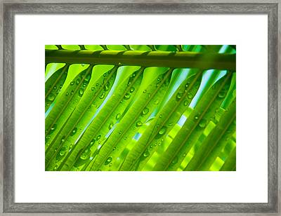 Morning Dew Framed Print by Kim Lagerhem