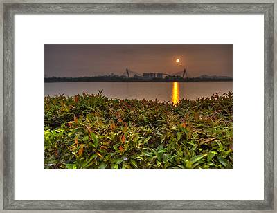 Morning Dew Framed Print by Mario Legaspi