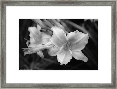 Framed Print featuring the photograph Morning Dew On Lilies by Ross Henton