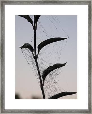 Morning Dew On Spiderweb Framed Print
