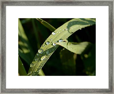 Morning Dew Framed Print by Paige Sims