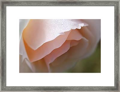 Morning Dew Peach Rose Flower Framed Print by Jennie Marie Schell