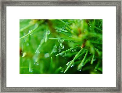 Morning Dew Framed Print by Rhonda Barrett
