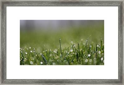 Morning Dew Framed Print by Silke Brubaker
