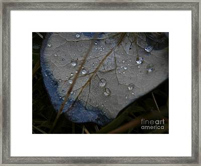 Morning Dew Framed Print by Steven Valkenberg