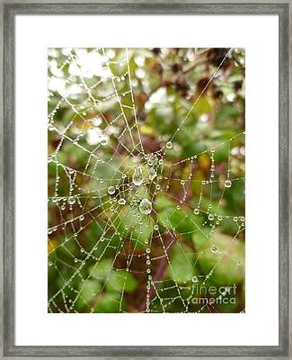 Framed Print featuring the photograph Morning Dew by Vicki Spindler