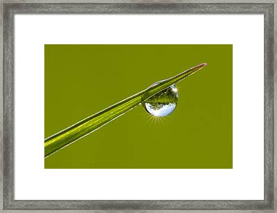 Morning Diamond Framed Print by Mircea Costina Photography