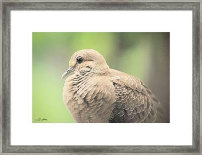 Morning Dove Framed Print