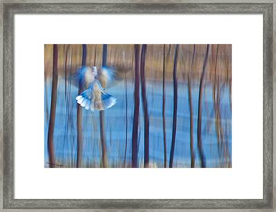 Morning Dove Framed Print by Theresa Tahara