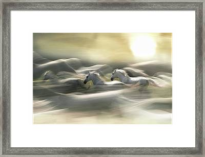Morning Dream Framed Print