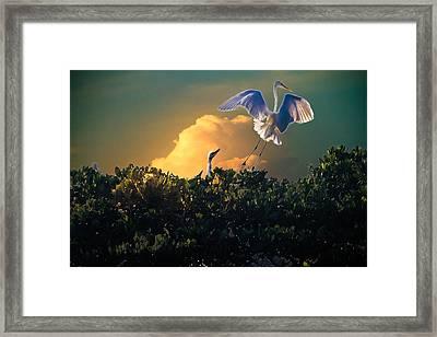 Morning Egret Framed Print