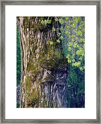 Morning Ent Framed Print