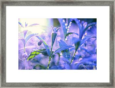 Morning Field Framed Print by Sabine Jacobs