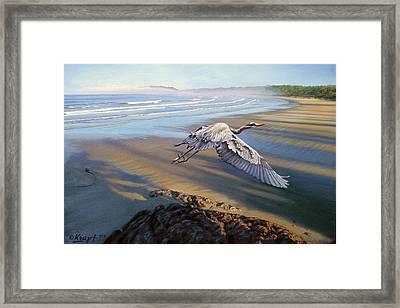 Morning Fight-blue Heron Framed Print by Paul Krapf