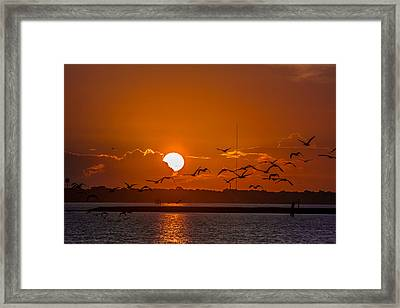 Framed Print featuring the photograph Morning Flight by RC Pics
