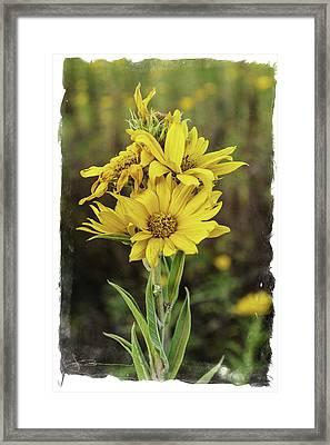 Morning Flowers Framed Print