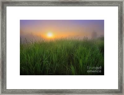 Morning Fresh Framed Print